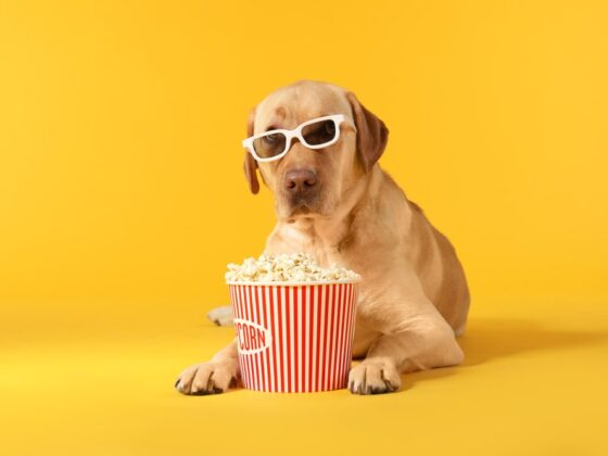 Beneficios-palomitas-de-maíz-perros-@revistapetlovers-dog-in-sunglasses-eating-movie-theater-popcorn